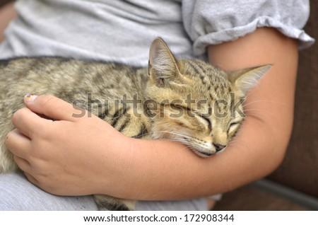 Little kitten sleeping on child arm #172908344