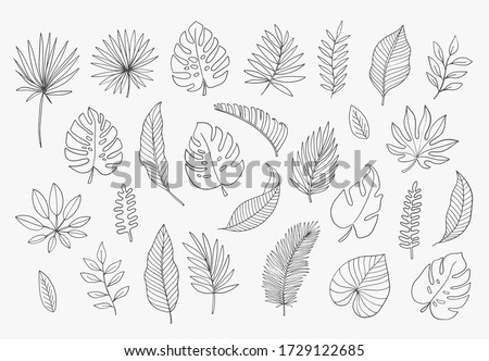 Tropical Leaves in doodle style. Vector hand drawn black line design elements. Exotic summer botanical illustrations. Monstera leaves, palm, banana leaf.  #1729122685