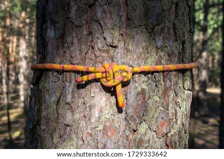 Sea knots on the background of a pine tree. Polyamide rope, various knots. Bremshey knot, Sheet bend, another knot, reef knot, reef knot ( another rope), Etc. #1729333642