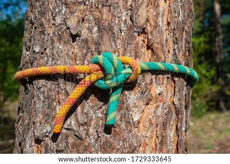 Sea knots on the background of a pine tree. Polyamide rope, various knots. Bremshey knot, Sheet bend, another knot, reef knot, reef knot ( another rope), Etc. #1729333645