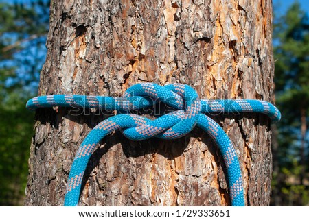 Sea knots on the background of a pine tree. Polyamide rope, various knots. Bremshey knot, Sheet bend, another knot, reef knot, reef knot ( another rope), Etc. #1729333651