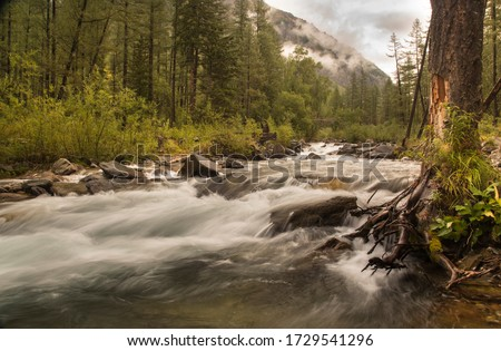 A slow shutter speed picture of a milky smooth mountain river that flows over stones through a forest valley with a big tree in the foreground and hillside covered by low clouds in the background