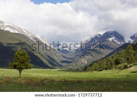 Looking toward the Rockies from Sheep Lakes.  Green grass, a single tree in the foreground and the Rockies with some snow in early summer.  Rain clouds gather over the mountains with storm clouds. #1729737712