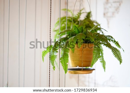 Pot of hanging Boston fern Royalty-Free Stock Photo #1729836934