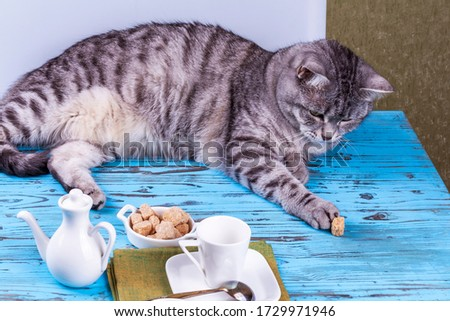 A beautiful gray cat is playing with a piece of cane sugar on a table with coffee utensils. #1729971946