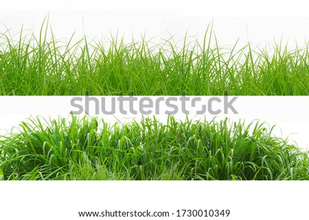 Green Grass Border isolated on white background.The collection of grass.(Manila Grass)The grass is native to Thailand is very popular in the front yard. #1730010349