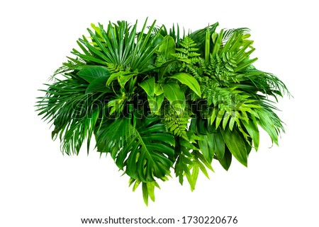 Group Green leaves tropical foliage plant bush of philodendron, dracaena and fern floral arrangment nature backdrop isolated on white background, clipping path included. #1730220676