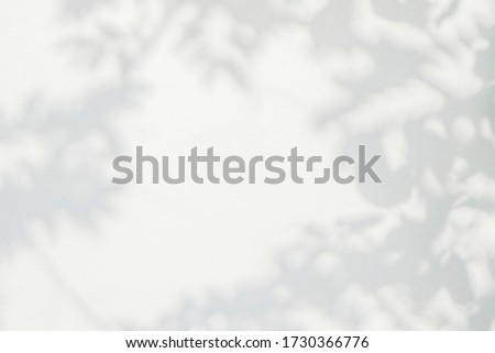 Light shadow of Leaves and tree branch background.  Natural leaves tree branch shadows and sunlight dappled on white concrete wall texture for background wallpaper and any design