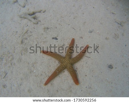 Picture in the Caledonian seabed of a starfish