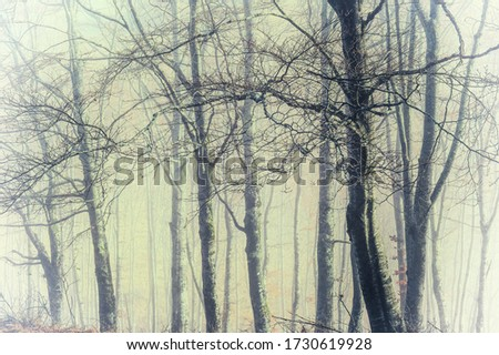 the morning mist in a group of beech trees in the mountains  and the light through the trees and the fog creates a magical atmosphere with vintage and instagram colors #1730619928