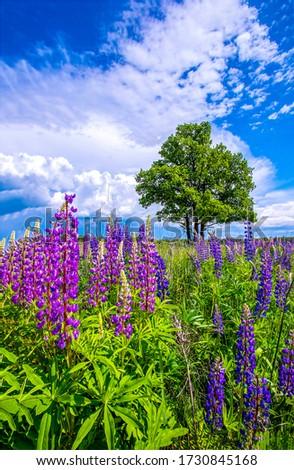 Summer meadow purple flowers view. Meadow flowers in summer scene #1730845168