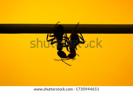 two ants kissing on grass on yellow background