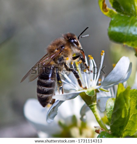 Picture a bee near a flower, spring, insects