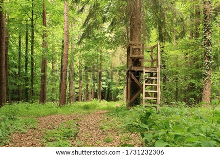 the hunter's seat in the green forest Royalty-Free Stock Photo #1731232306