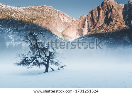 National park picture of Yosemite Fall, California, USA. White mist around the tree during winter covered by beautiful snow on the back of huge mountain range with waterfalls shaded by orange sunlight