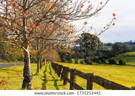 Natural landscape southern highlands NSW Australia  Royalty-Free Stock Photo #1731252445