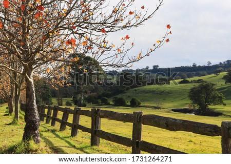 Autumnal landscape nature photography Southern Highlands NSW Australia  Royalty-Free Stock Photo #1731264271