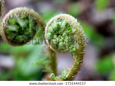 Fern growing interesting in spirals #1731444157