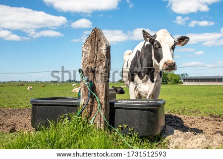 Black and white cow is standing next to a large drinking trough in a green pasture #1731512593
