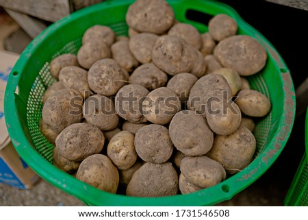 Potato is a healthy food source for diabetics