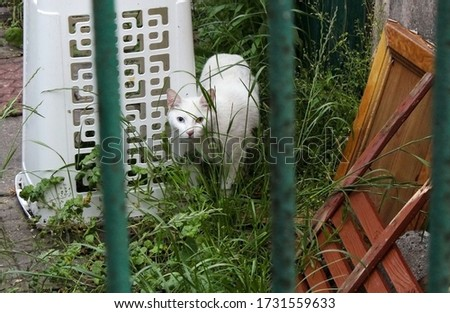 White cat skulking in an allotment in grass behind a fence.