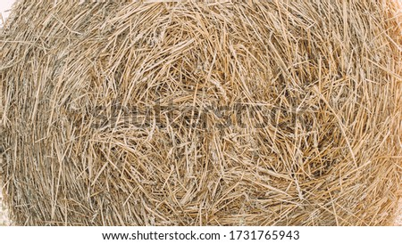 Bales of straw are illuminated by the sun. Macro photo nature dry hay. Texture background dry Wheat Straw. #1731765943