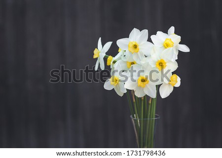 A bouquet of narcissus on a dark, old, wooden background. Spring time #1731798436