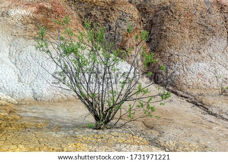 Lonely green tree growing in an orange clay desert