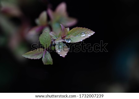 Green nature leaves. Rain drops on green leaves and small flowers. Red flower leaves. Close up macro photography. Beautiful nature macro photography. Close up flower photo.