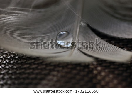 Bird Feather with Water Droplets #1732116550