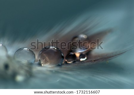 Bird Feather with Water Droplets #1732116607