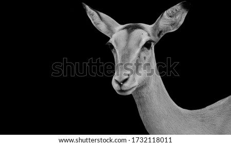 Cute Black And White Deer Looking #1732118011