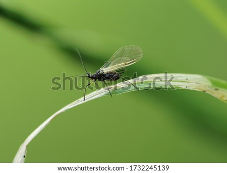 Close up of a gnat on grass