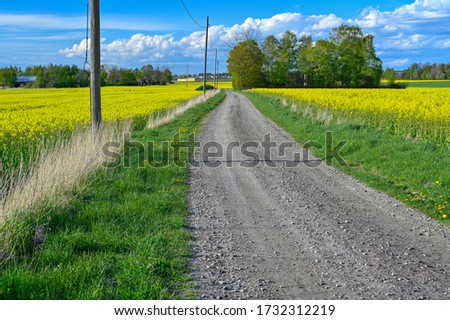 gravel road through fields of rapeseed flowers #1732312219