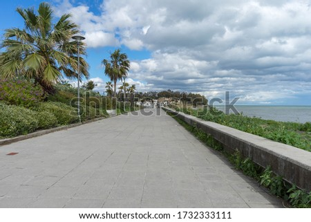 A path of stone at the shoreline with palm trees and a beautiful #1732333111
