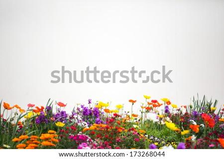 Flower garden. #173268044
