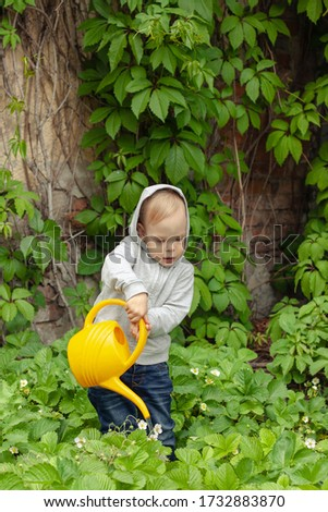 A kid watering green strawberry with a yellow watering can against an old wall with leaves of wild grapes #1732883870