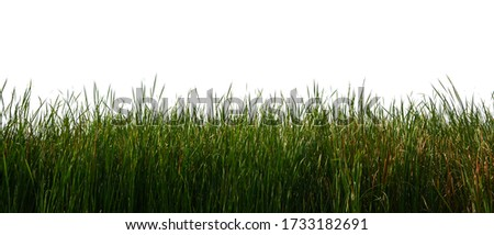 Large tall grass Isolated on a white background Royalty-Free Stock Photo #1733182691