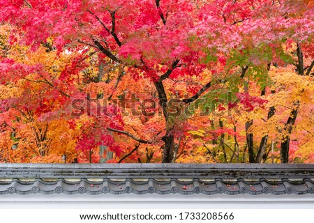 Japanese roof with colorful leaves in the garden, Pavilion in Eikando temple or Eikan-do Zenrinji shrine, famous for tourist attractions in Kyoto, Japan. Autumn foliage season and travel concept