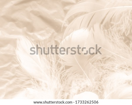 Beautiful abstract white and brown feathers on white background and soft yellow feather texture on white pattern and yellow background, feather background, gold feathers banners #1733262506