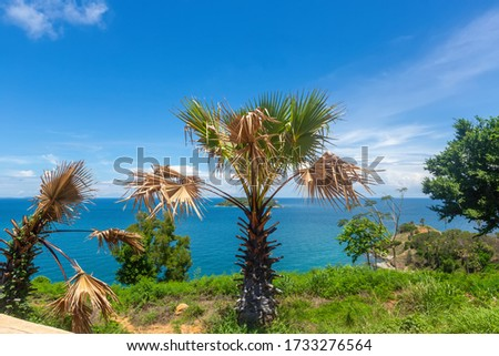 Tropical seascape. Empty beaches, turquoise calm sea, palm trees, coral reef under water - asian tropical paradise. Blue ocean water in a tropical lagoon on jungle covered island #1733276564