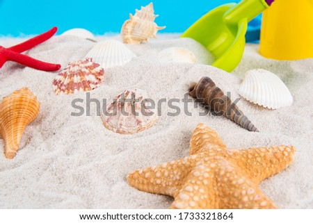 Pictures of starfish, conch, and shellfish on the sandy beach