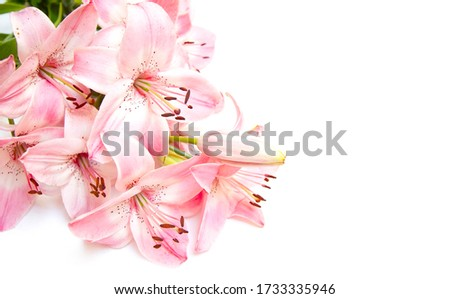 Greeting card design with pink lily flowers isolated on white background