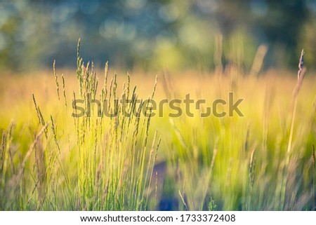 Beautiful close-up ecology nature landscape with meadow. Abstract grass background. Close up spring nature landscape blurred dream field meadow