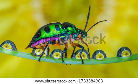 This is a beautiful picture of an colorful insect.