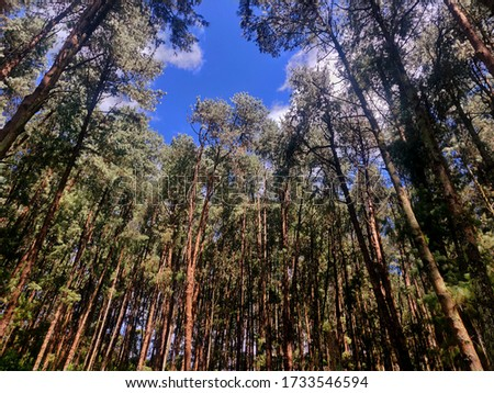 forest green blue sky beautiful forest pic