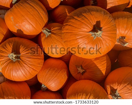 Pumpkins on display at the supermarket.