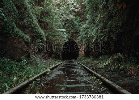 Old, abandoned railway tunnel in the middle of tropical forest Royalty-Free Stock Photo #1733780381