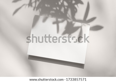 Summer stationery still life scene. Close-up of blank paper, greeting card mock-up. Trendy olive tree branches long shadows. White table background in sunlight. Flat lay, top view.Empty copyspace. Royalty-Free Stock Photo #1733857571