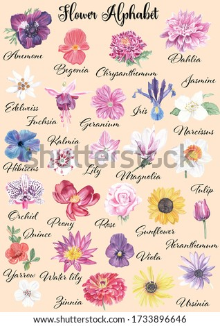 Watercolor flowers alphabet Flower for each letter of english language Alphabet. Hand painted hand drawn wall art Home decor Realistic flower painting Abc poster Kids educational poster Colorful